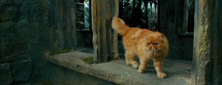 crookshanks Harry Potter