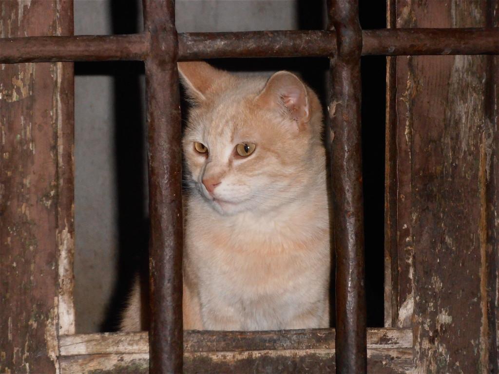 cat prisoner