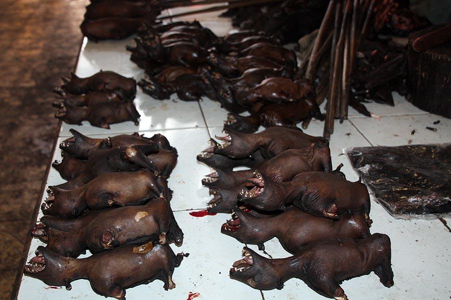 barbecued bat