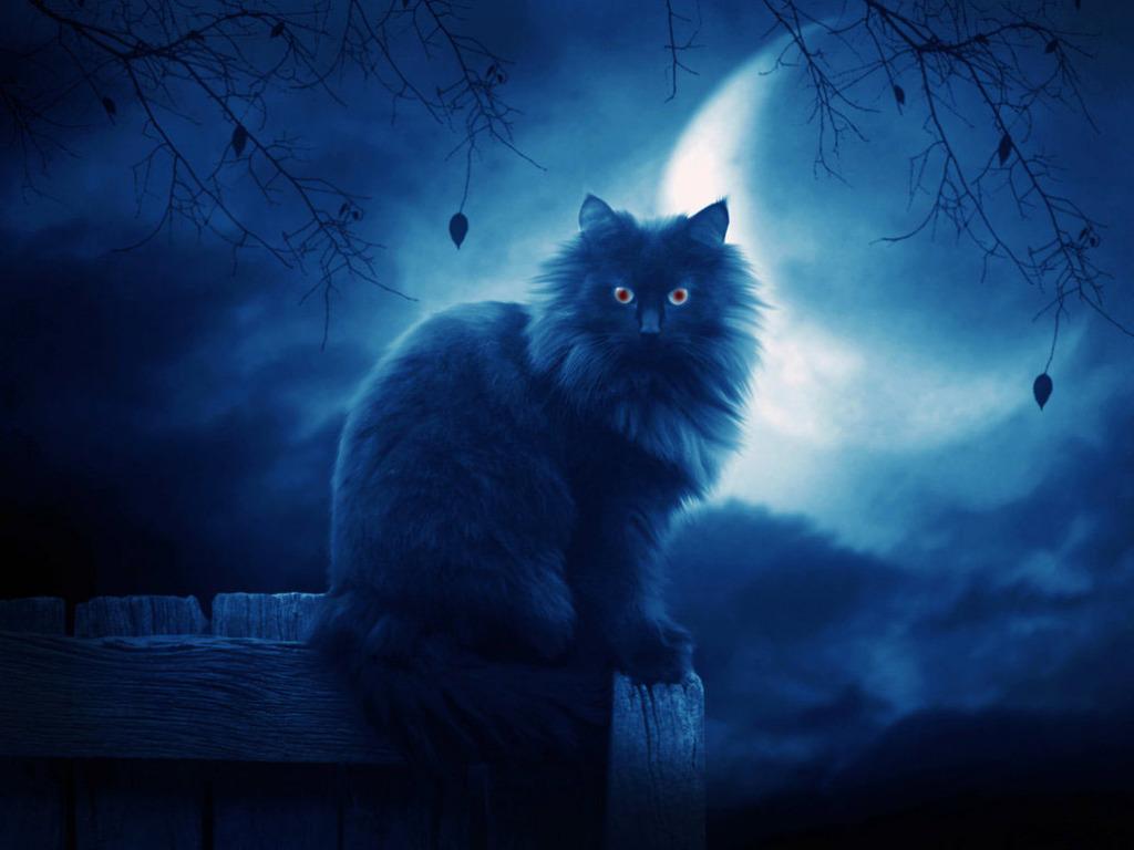 the yule cat