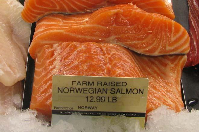 farm raised salmon