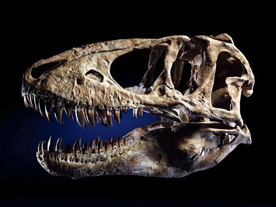 Nicholas Cage's Dinosaur Skull