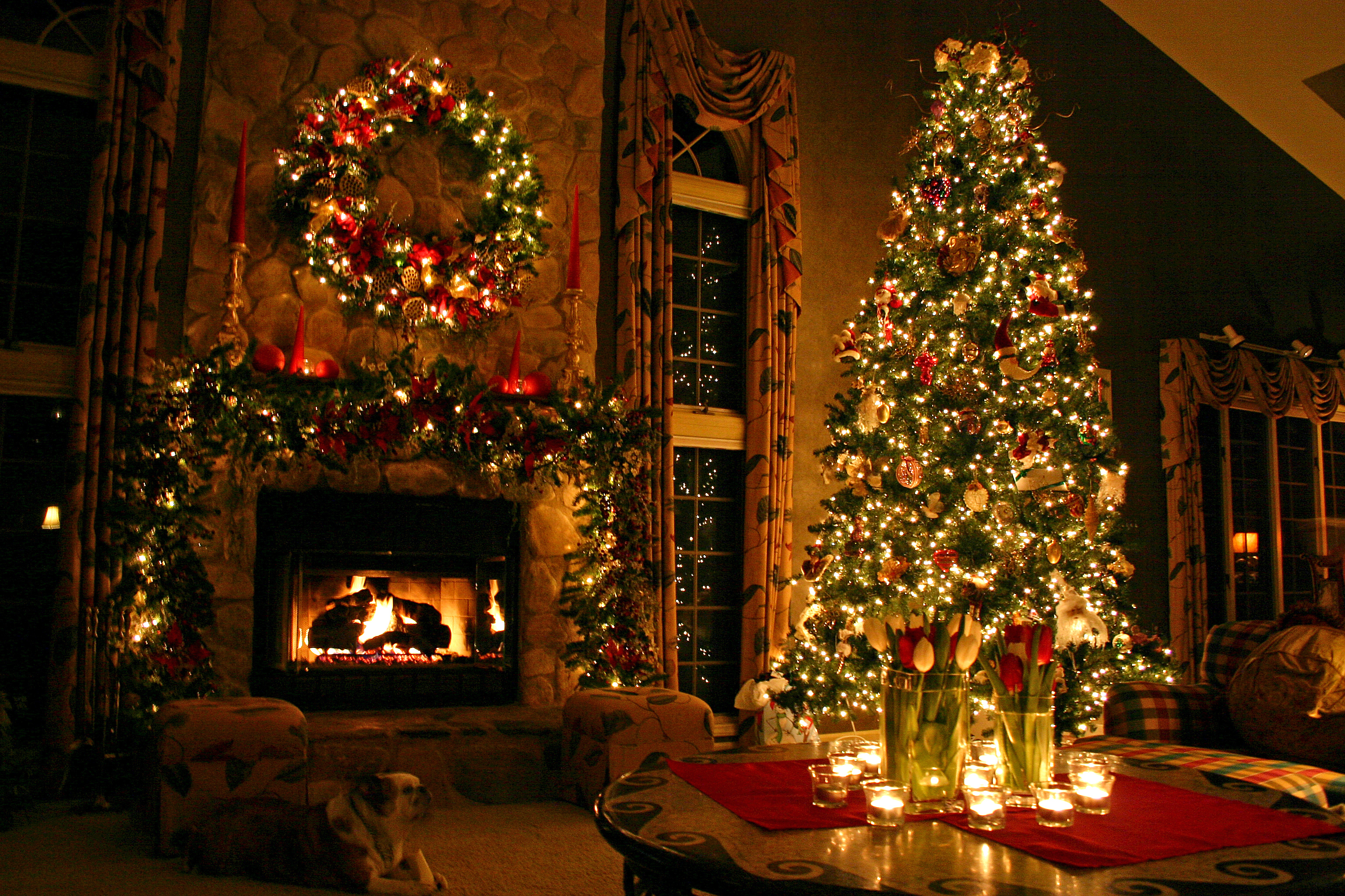 10 Christmas Tree Facts To Make You Feel Festive