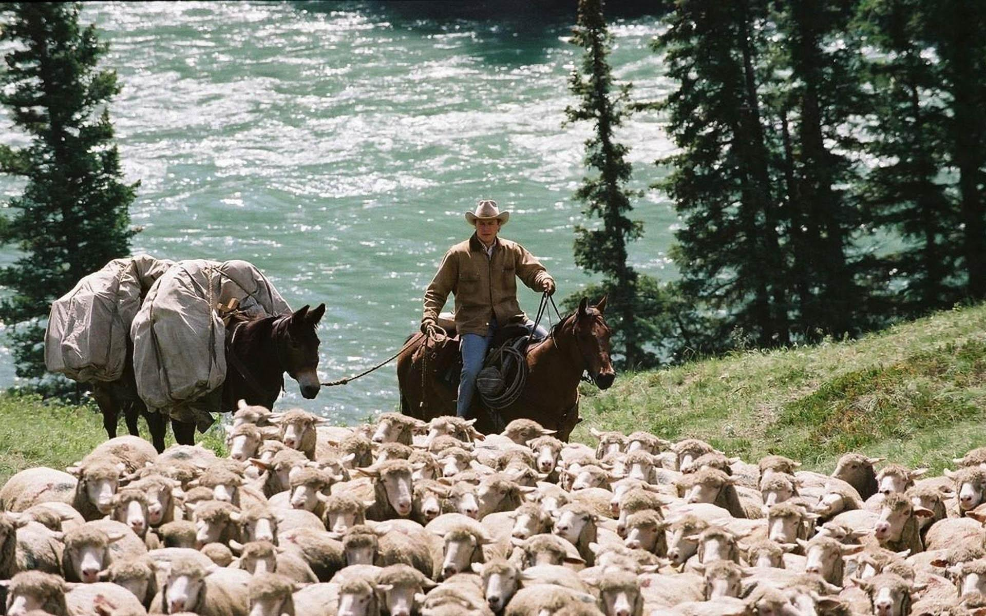 10 Brokeback Mountain Facts You Will Love The List Love