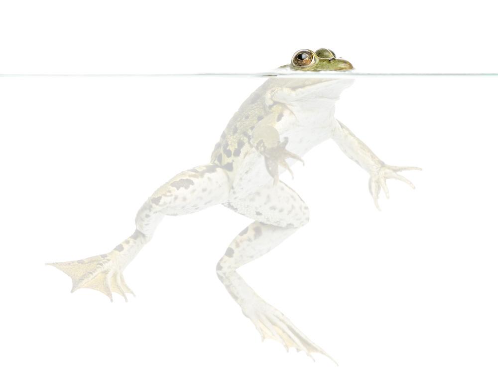 frog milk