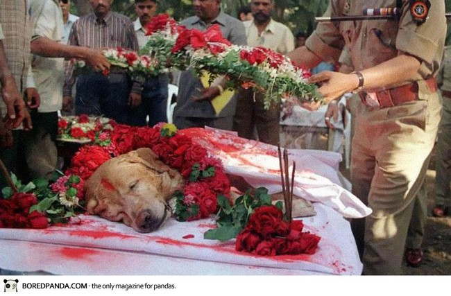 Zanjeer the dog